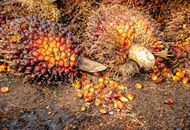 Business Incentives for the Malaysian Sustainable Palm Oil Certification Image