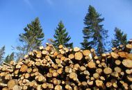 Set up a Company in the Forestry Sector image